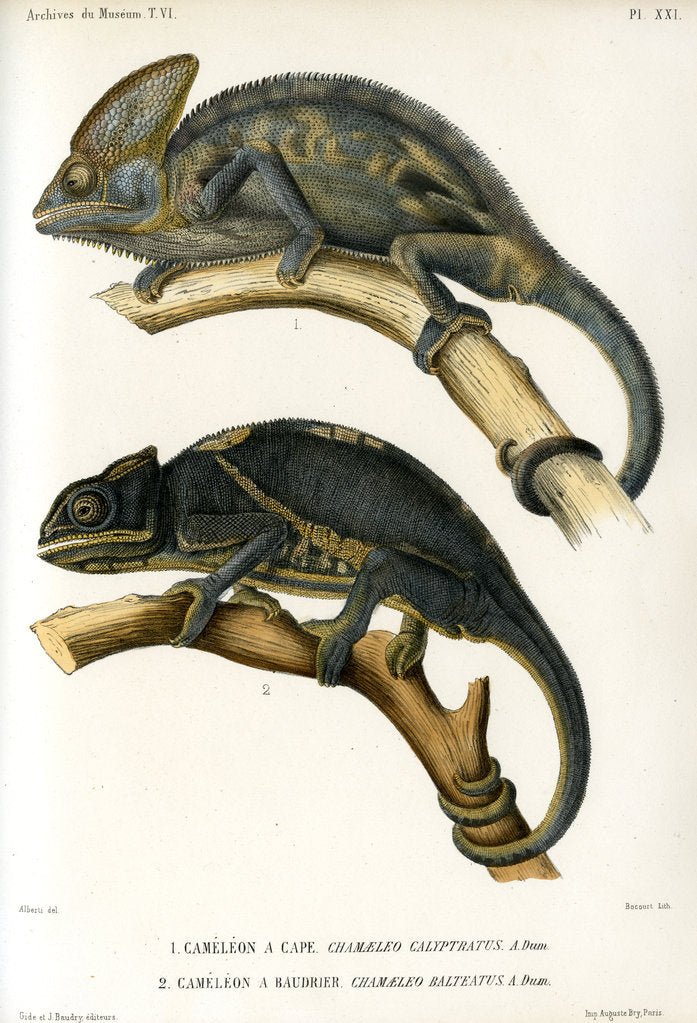 Detail of Chameleons by Marie Firmin Bocourt