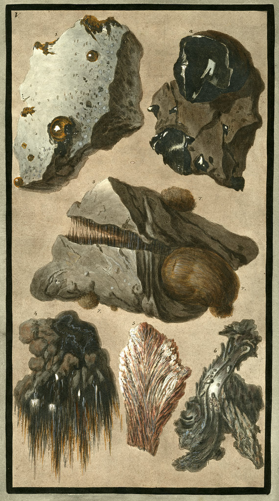Detail of Rock specimens by Pietro Fabris