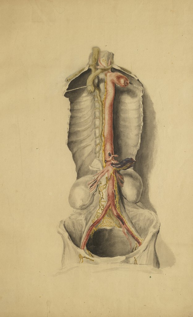 Detail of Anatomical study of the thoracic duct by Thomas Bonnor