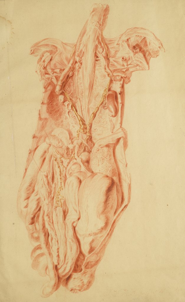 Detail of Anatomical study of the human torso by Jan van Rymsdyk