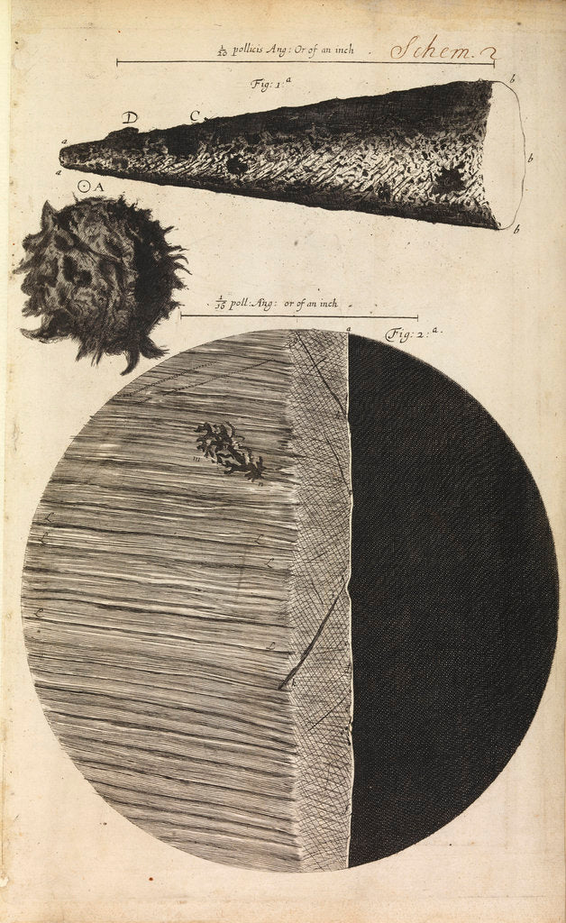 Detail of Microscopic views of the point of a needle; printed full-stop; edge of razor by Robert Hooke