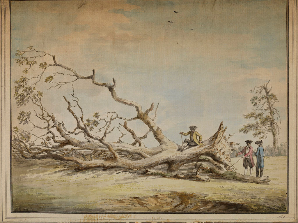 Detail of Storm-felled tree near Roehampton by Edward Edwards
