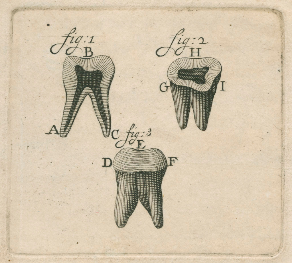 Microscopical observations of the structure of human teeth by Anonymous