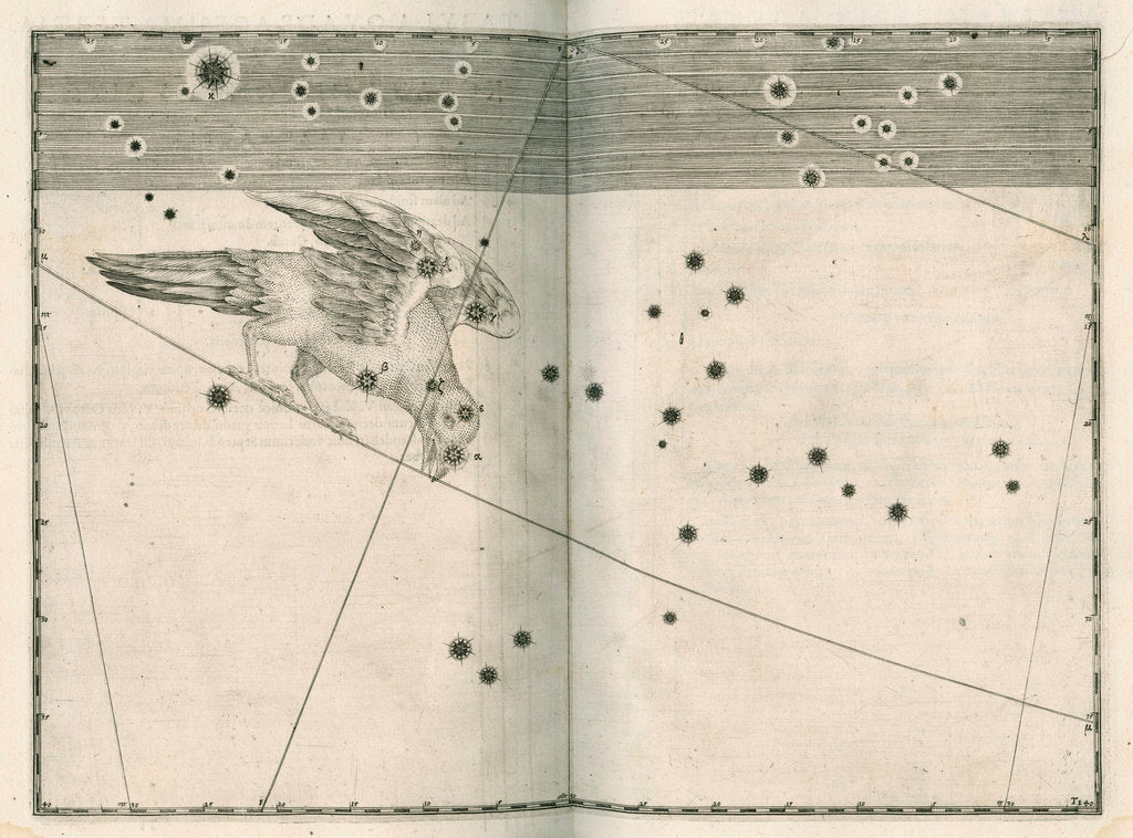 Detail of Constellation of Corvus by Alexander Mair