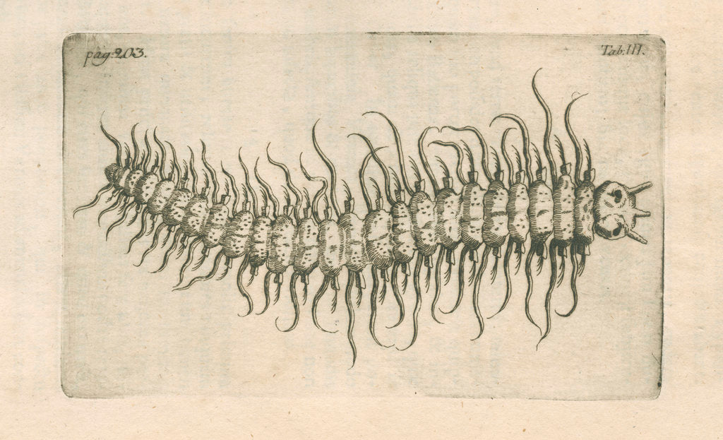 Detail of Marine plankton from Linnaeus's 'Academic delights' by Anonymous
