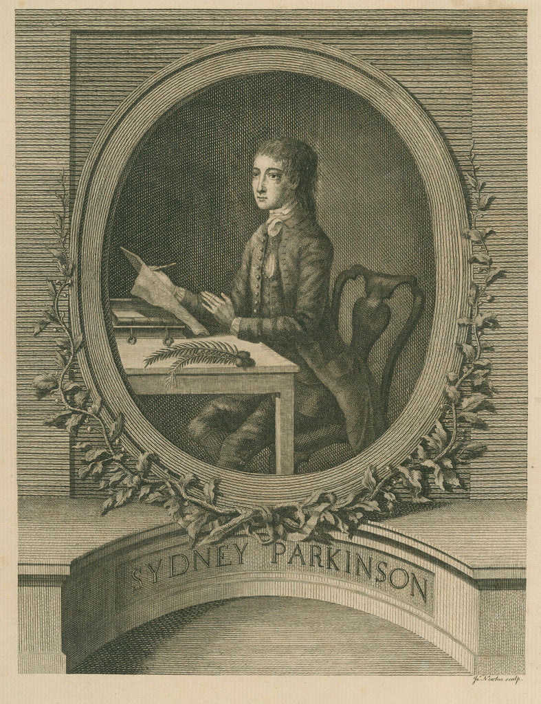 Detail of Portrait of Sydney Parkinson (1740-1771) by James Newton