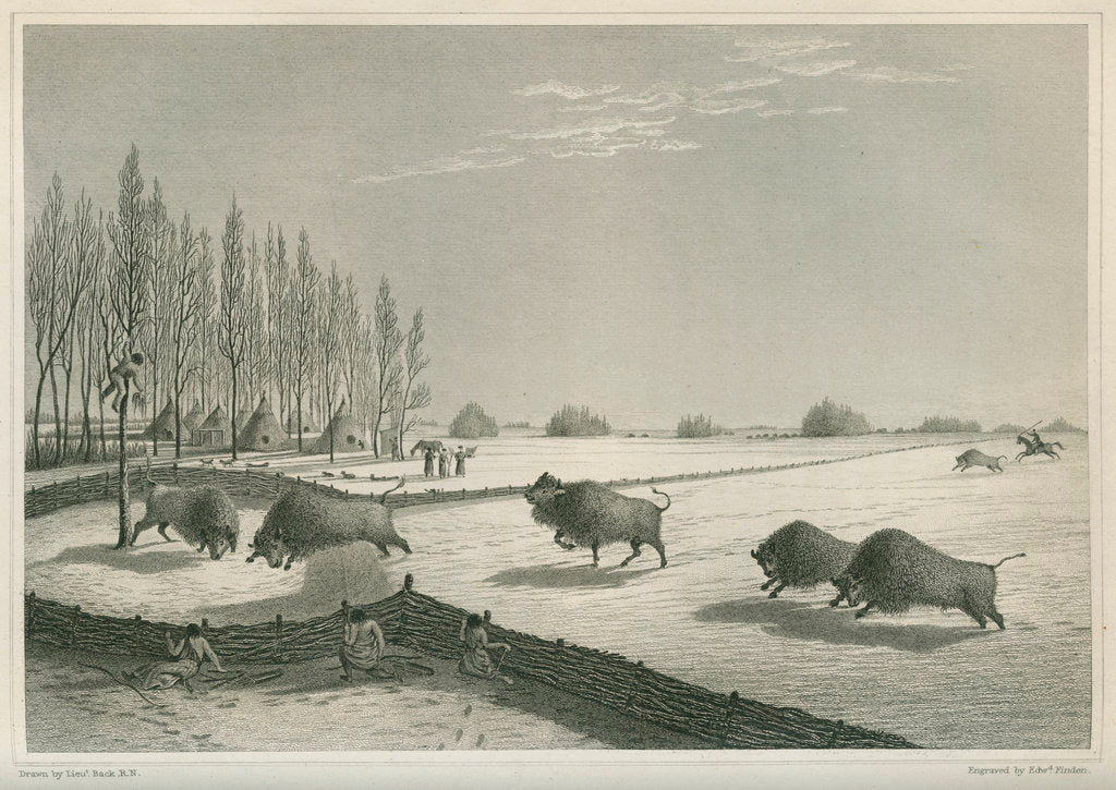 Detail of 'A buffalo pound, Feb. 8 1820' by Edward Francis Finden
