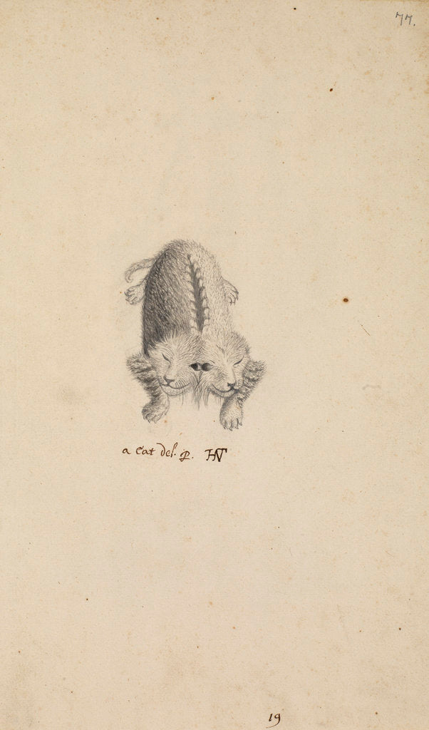 Detail of 'Monstrous cat' by Henry Hunt