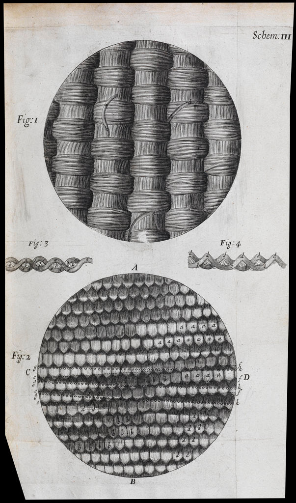 Detail of Microscopic view of silk and taffeta by Robert Hooke