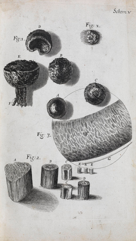 Detail of Microscopic view of hair and a shell by Robert Hooke