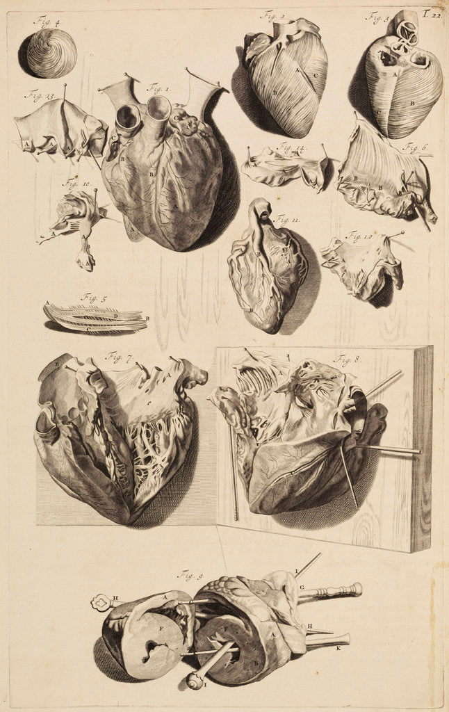 Detail of The human heart by Gerard de Lairesse