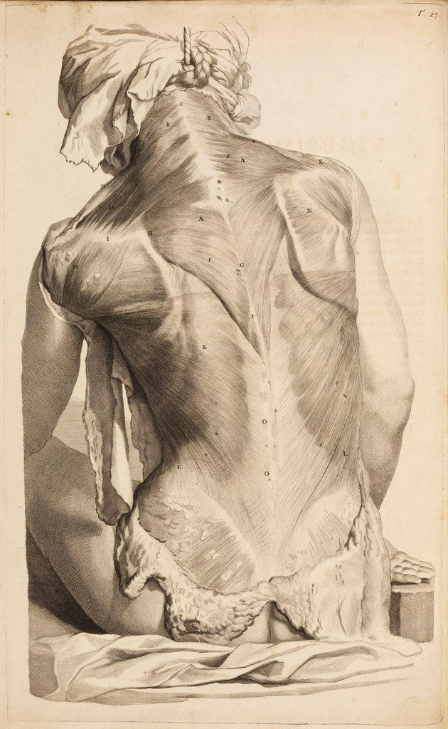 Detail of Back muscles by Gerard de Lairesse