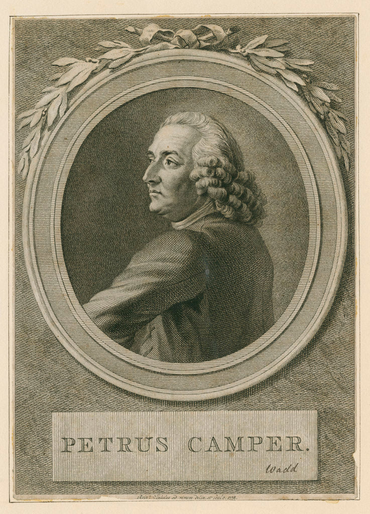 Detail of Portrait of Pieter Camper (1722-1789) by Reinier Vinkeles