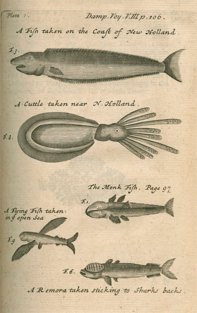 Detail of Marine life of Australia [New Holland] observed by William Dampier (1651-1715) by Anonymous