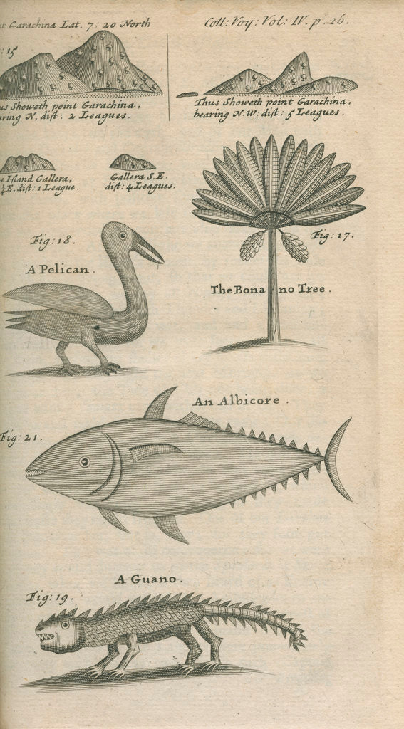 Detail of Landmarks and wildlife of Panama, observed by William Funnell by Anonymous