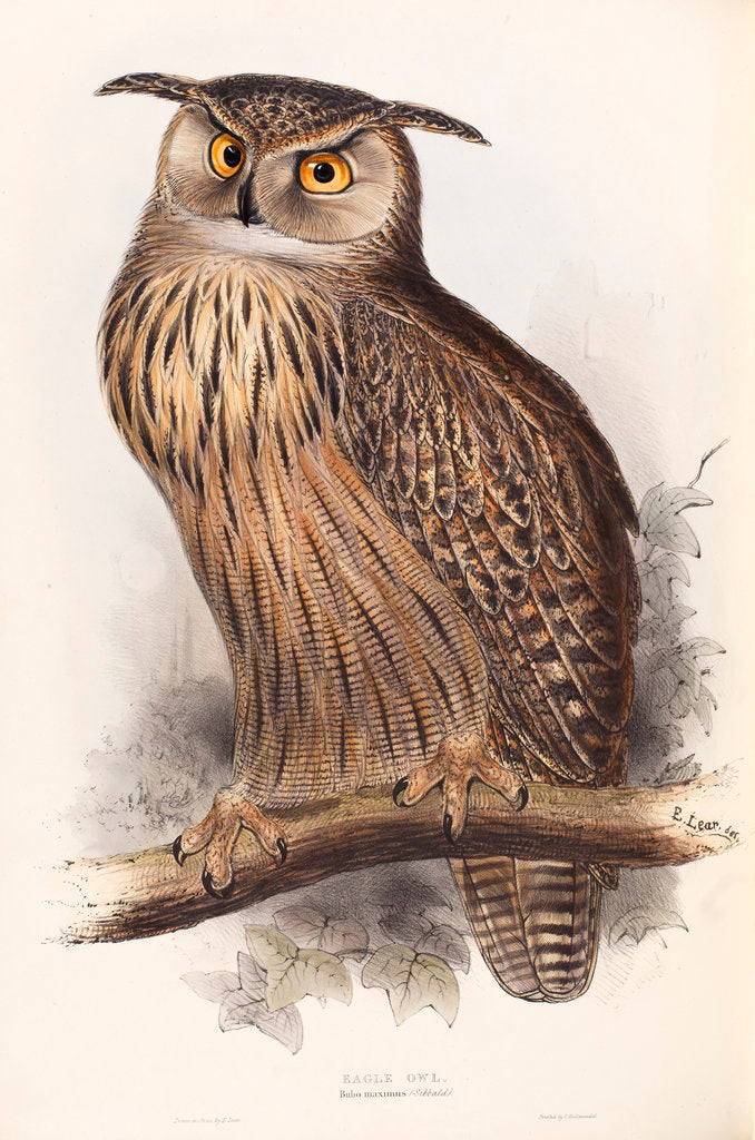 Detail of Eagle Owl by Edward Lear