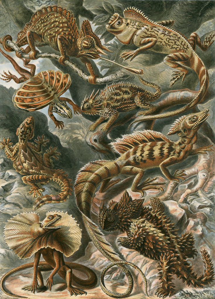 Detail of 'Lacertilia' [lizards] by Adolf Giltsch