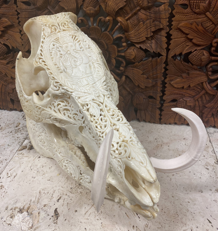 Intricately Hand Carved Wild Boar Skulls with Ganesh