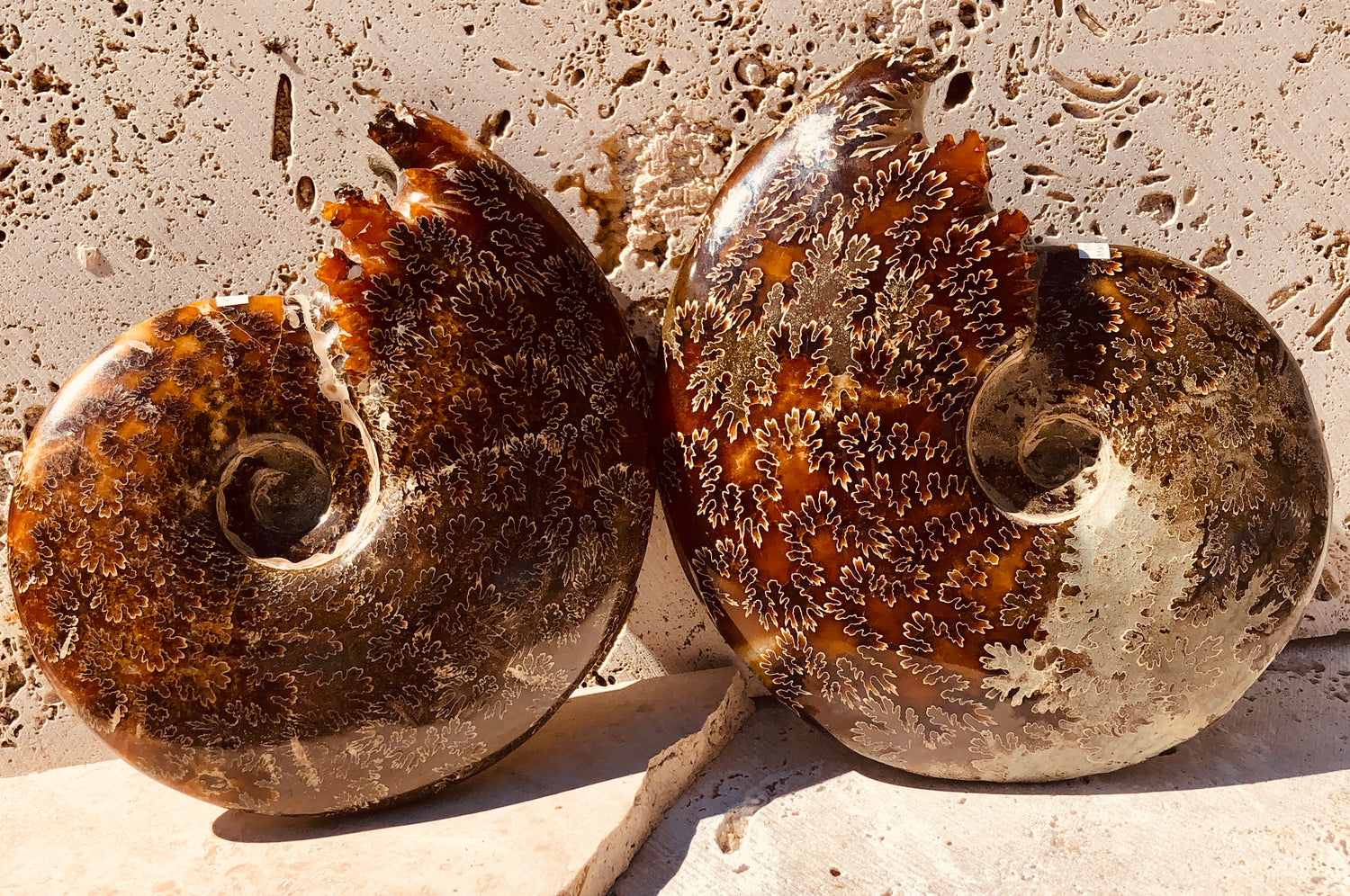Larger Ammonite Fossiled with Chambered ends from Madagascar