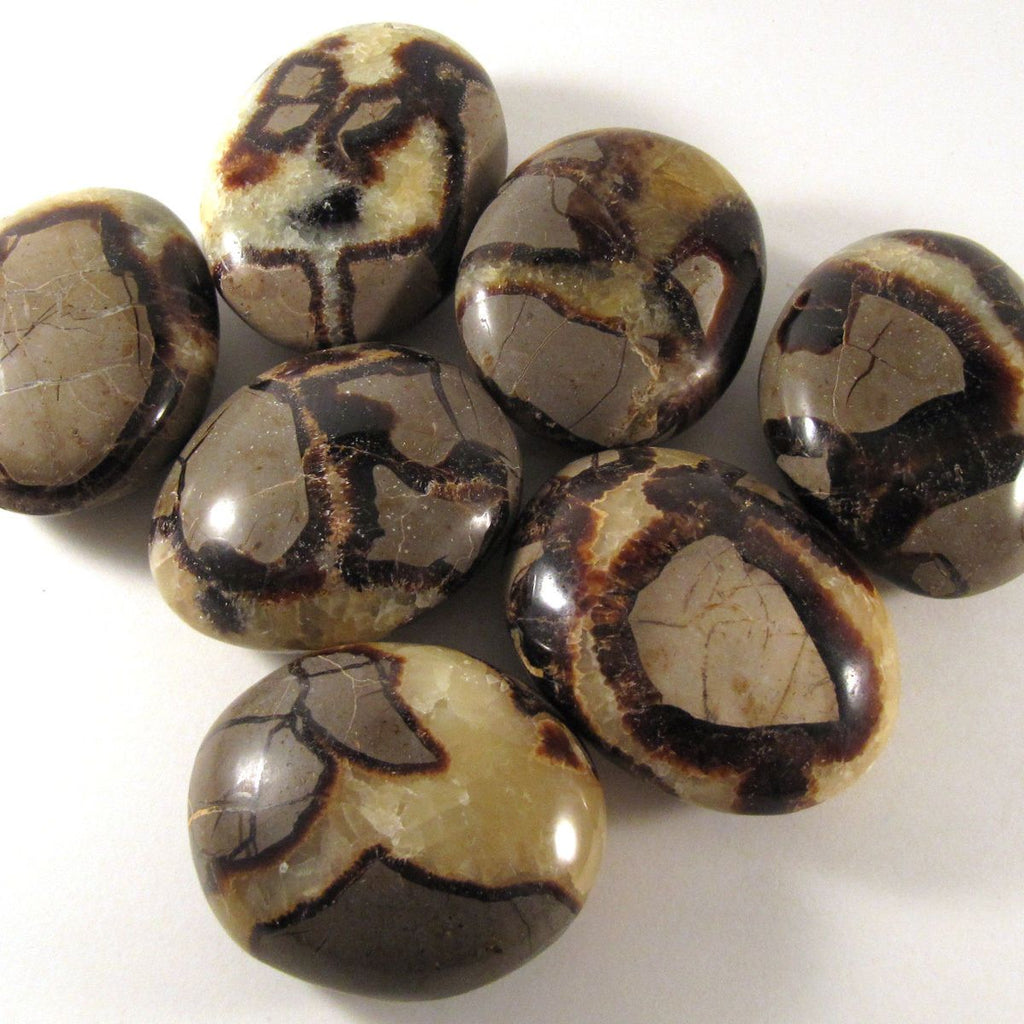 Septarian Palm Stones