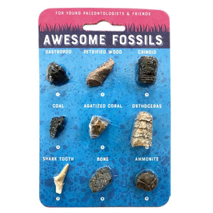 Awesome Fossils Sweet Thrills Toronto