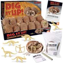 Dig It Up! Dinosaur Skeleton