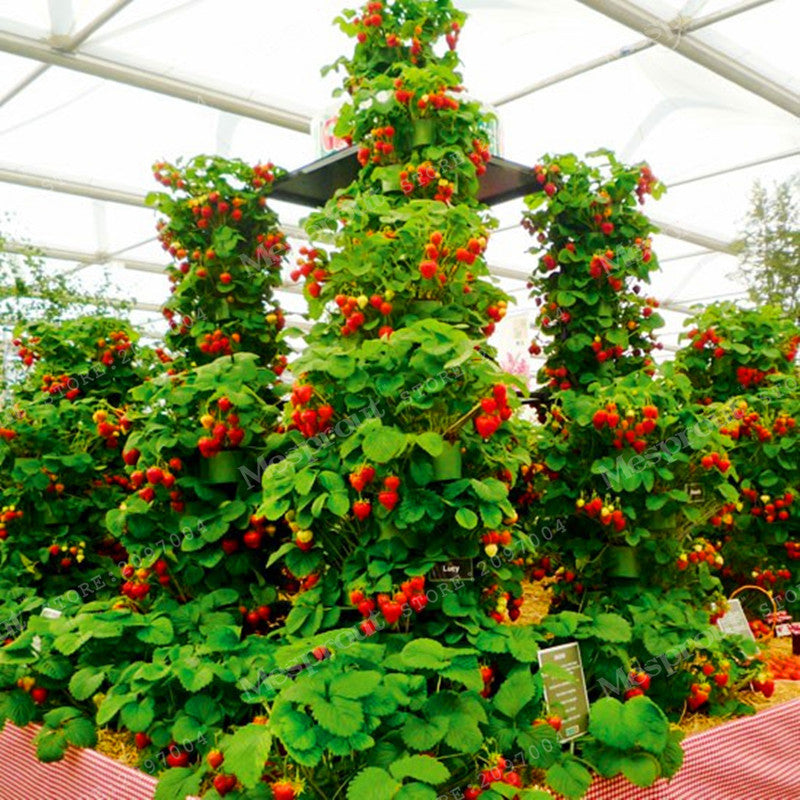 100 Pcs Tree Climbing Strawberry Seeds