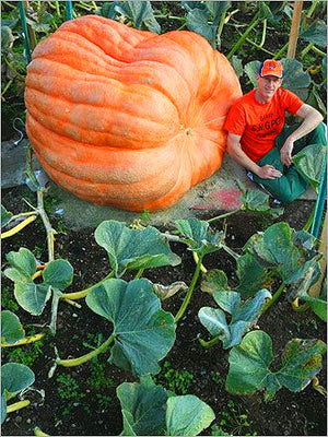 20 Pcs Giant Pumpkin Seeds