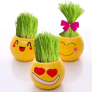 Grass Doll Potted Plants