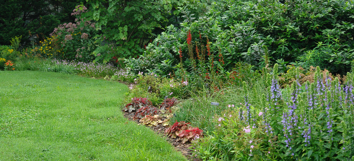 How To Create A Wildlife Habitat American Beauties Native Plants