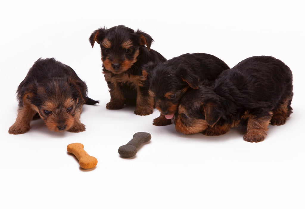 What To Look For When Buying Wholesale Dog Treats