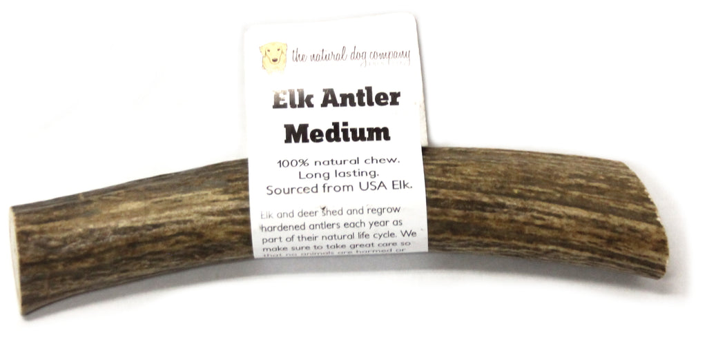 Elk Antler - Medium Whole