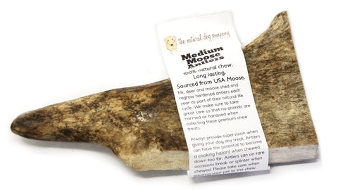 Moose Antler - Medium