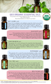 Red Thyme Organic Essential Oil - 5 ml