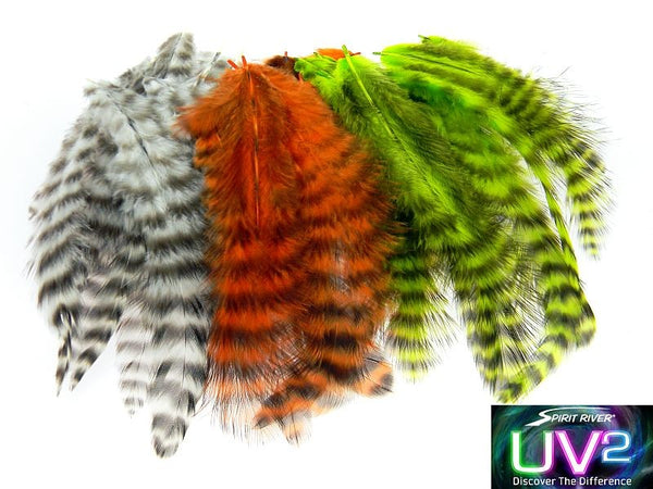Spirit River UV2 Grizzly Soft Hackle