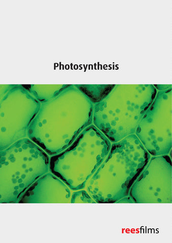 Cell Biochemistry Series: Photosynthesis