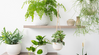 10 Plants to Detox Your Home