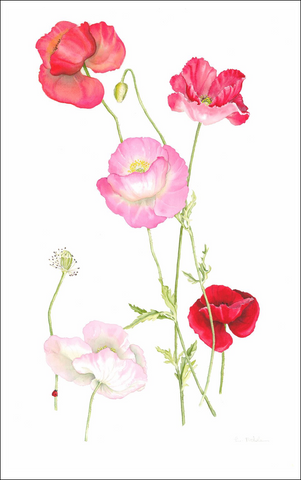 Shirley Poppies printed tea towel