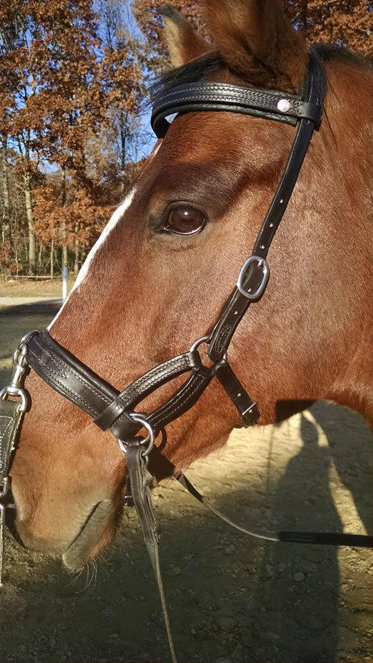 Leather Bitless Bridle Farah DeJohnette