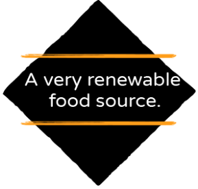 A very renewable food source.