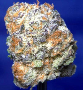 Purple Punch strain