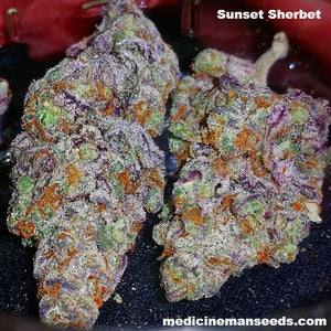 Sunset Sherbet strain