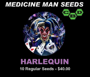 Harlequin - 10 regular seeds