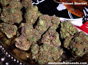 Sunset Sherbet strain seeds