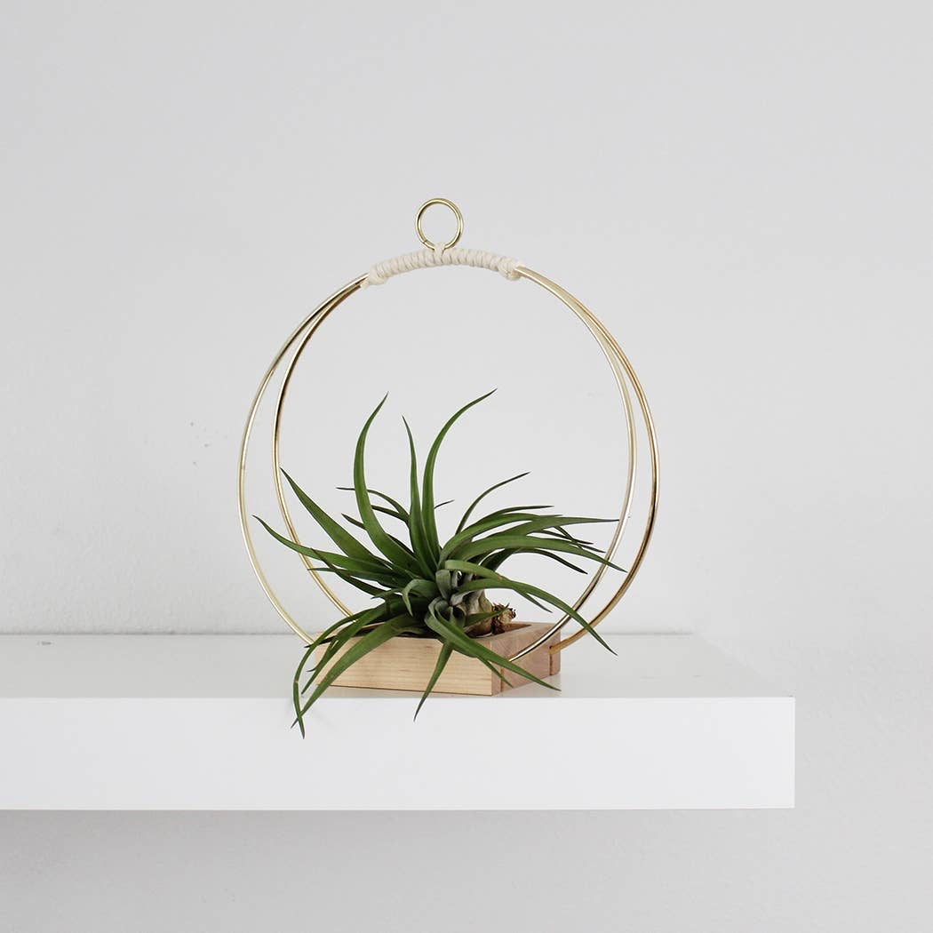 Brass Circle Plant Holder