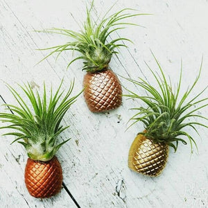 Pineapple Air Plant Magnets