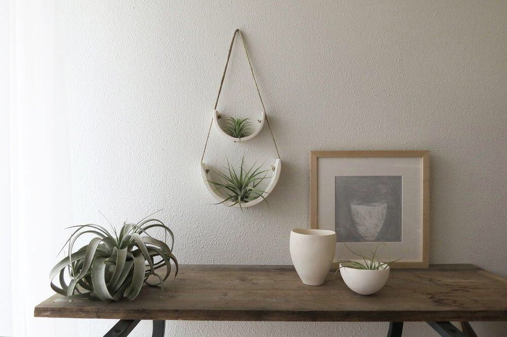 An office scene with two air plant hangers on the wall, hung in a pleasing pattern to look like they are connected. There is a desk with planters and a giant air plant.
