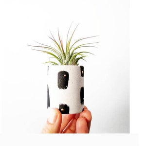 Mini Mod Air Plant Holder