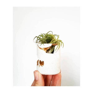 Perfectly Imperfect Mini Planter