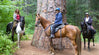 7 Great Reasons to Ride Mt. Adams Horse Camp